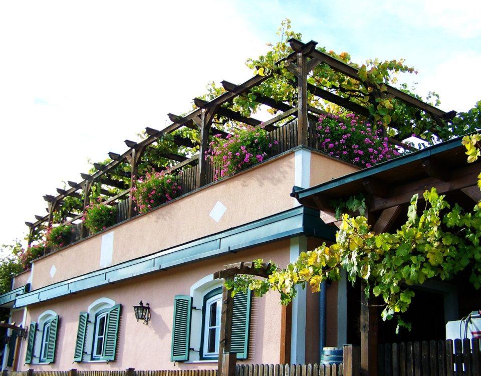 Cómo cuidar plantas en una terraza