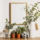 plantas decorativas fáciles