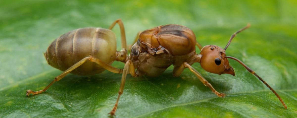 cómo eliminar las hormigas de tus plantas