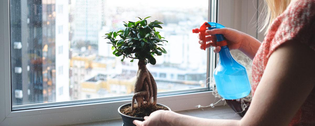 cómo cuidar tu primer bonsái