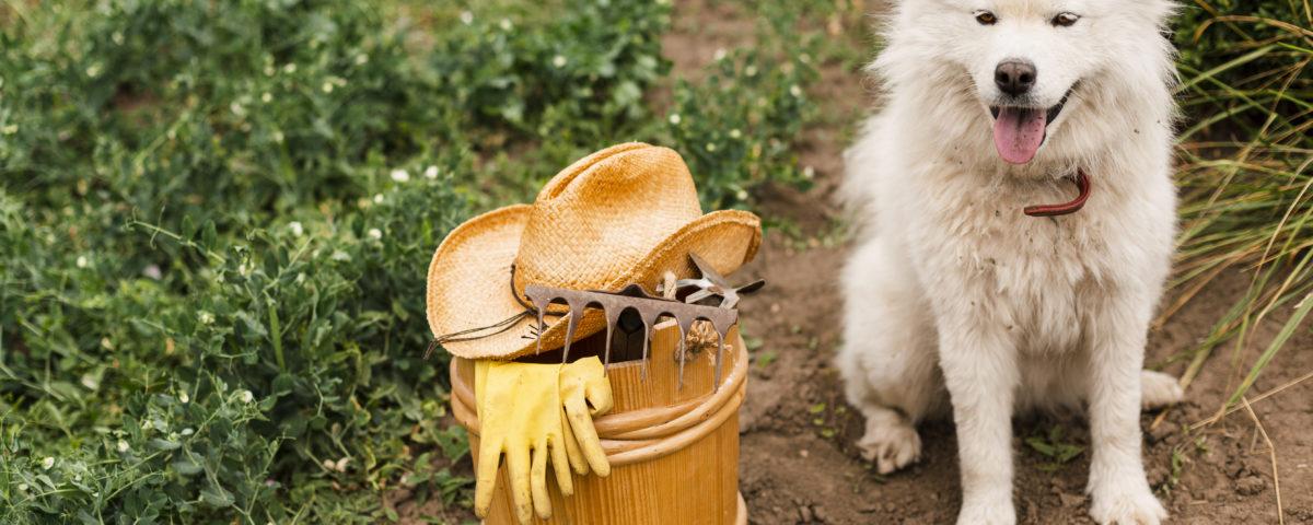 protege el jardín de tus mascotas