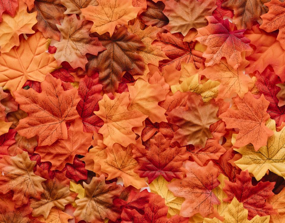 prepara tu jardín para el otoño