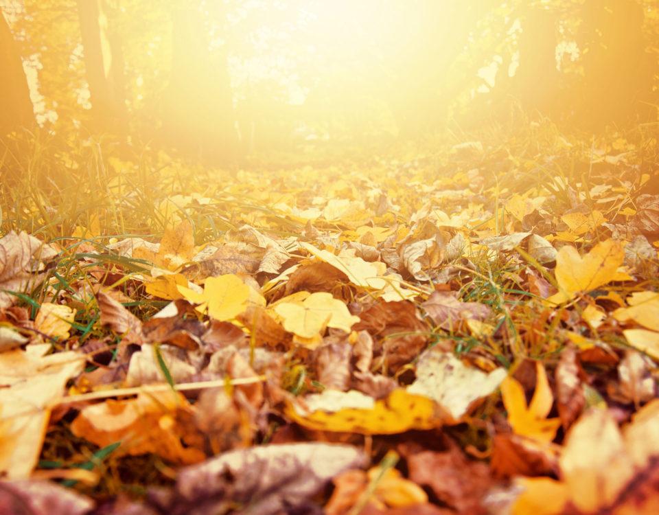 hojas otoño jardín