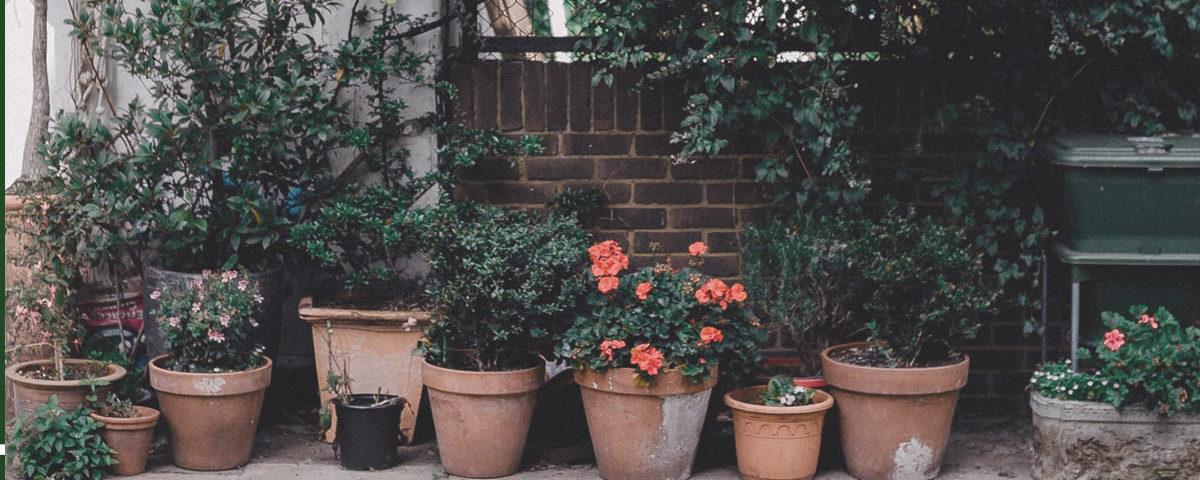 plantas del frio