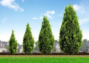 elegir un árbol