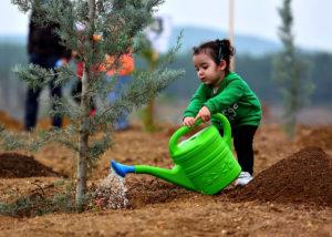 regar un árbol